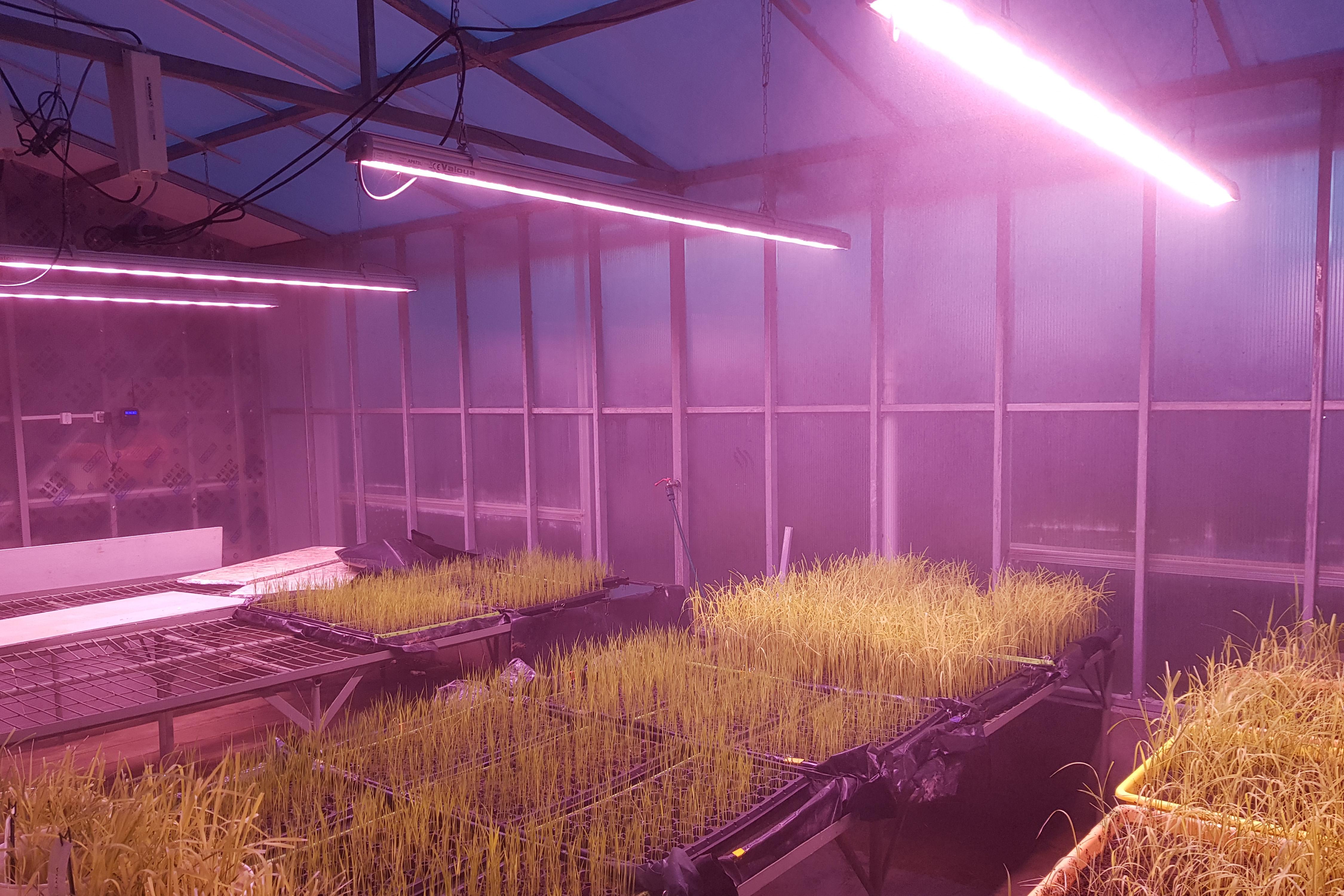 https://www.advanticsys.com/wp-content/uploads/2018/11/greenhouse-inia-lighting.jpg