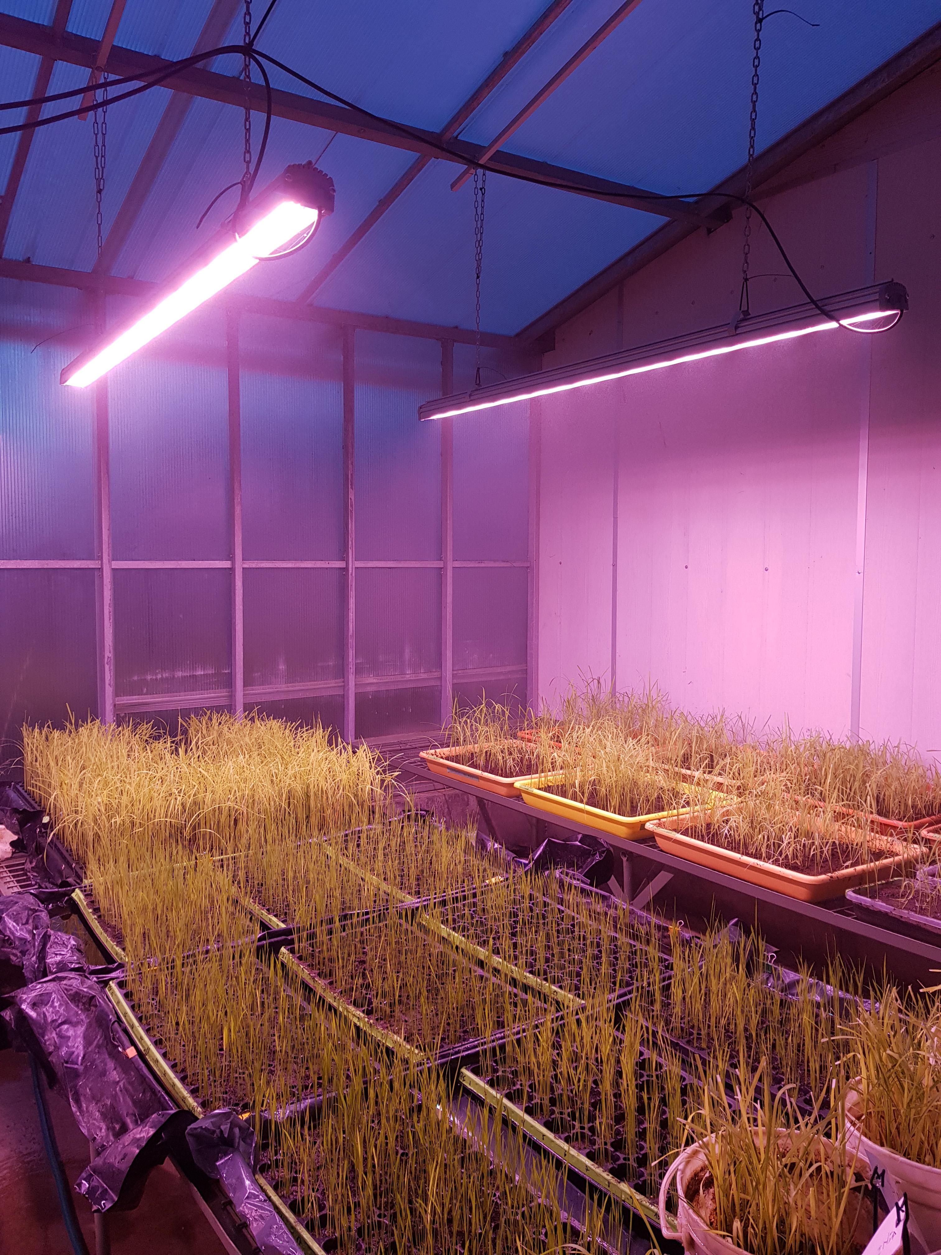 https://www.advanticsys.com/wp-content/uploads/2018/11/greenhouse-inia-lighting2.jpg